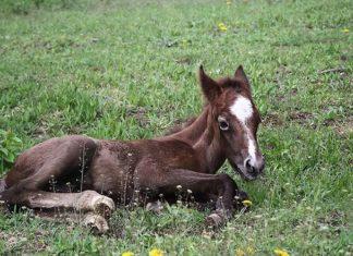 Biotyna dla koni – kiedy jest stosowana?