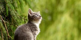 Jak nauczyć kota załatwiać się do kuwety